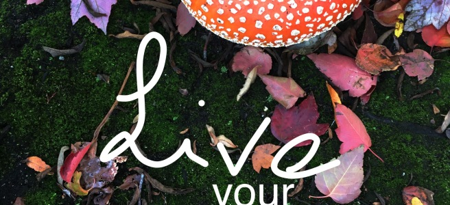 live your present, mushroom close up 7daysPresent TM logo - 7 days Present - mindfulness and meditation experiences - seven days present - AirBnB experiences - 7days present - uplifting - positive - mindful - self-development -practice - inner peace and harmony - lessons - release stress chakras